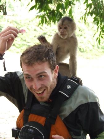 andrea-colombo-scimmia